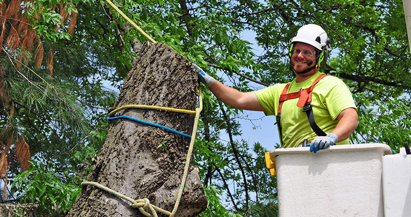 Emergency Tree Removal – Professionals Are Your Best Option