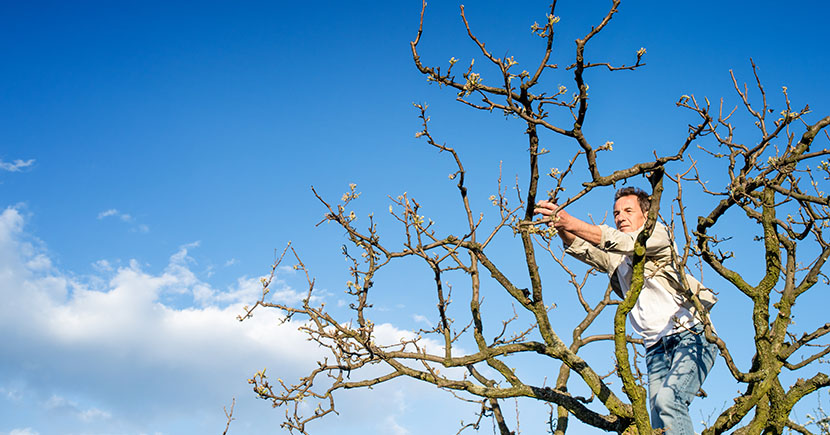 4 Must-Know Tree Care Tips