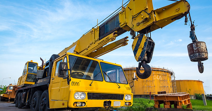 Top 6 Interesting Facts About Cranes