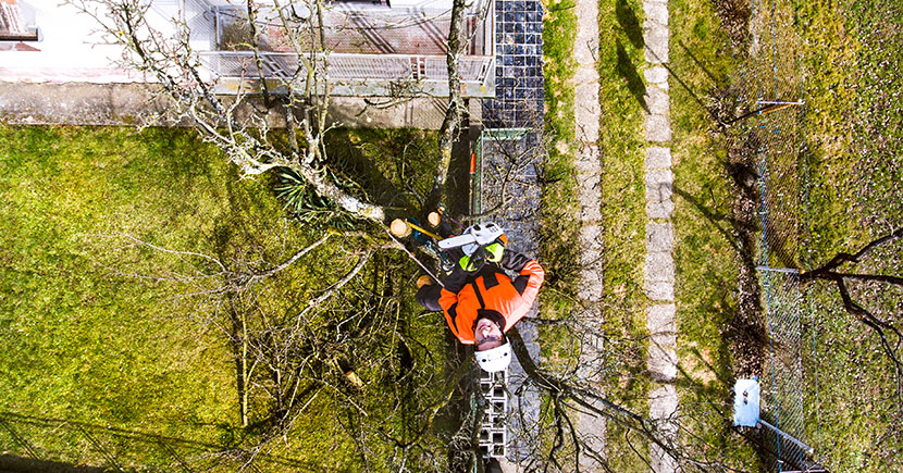 Which Questions To Ask A Tree Removal Service?
